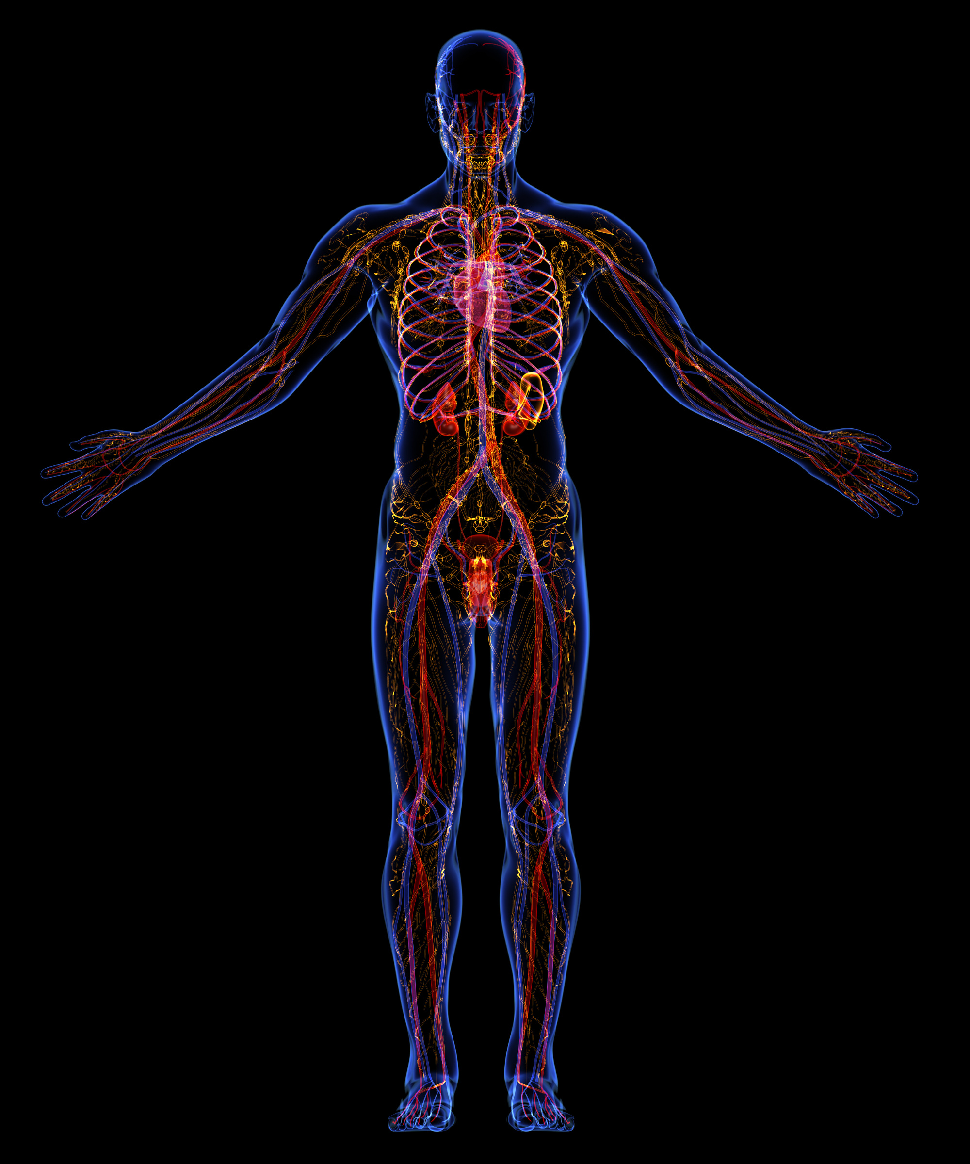 How to Keep your Lymphatic System Going